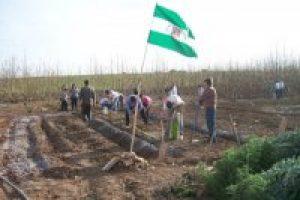 La Guardia Civil intenta desalojar a los ocupantes de Somontes