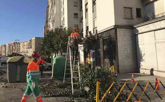 CGT denuncia las maniobras del Ayuntamiento de Algeciras contra RECOLTE (Parques y Jardines)