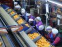Inspección de Trabajo insta a una cooperativa citrícola de Castelló a priorizar las necesidades fisiológicas de las trabajadoras frente a otros intereses
