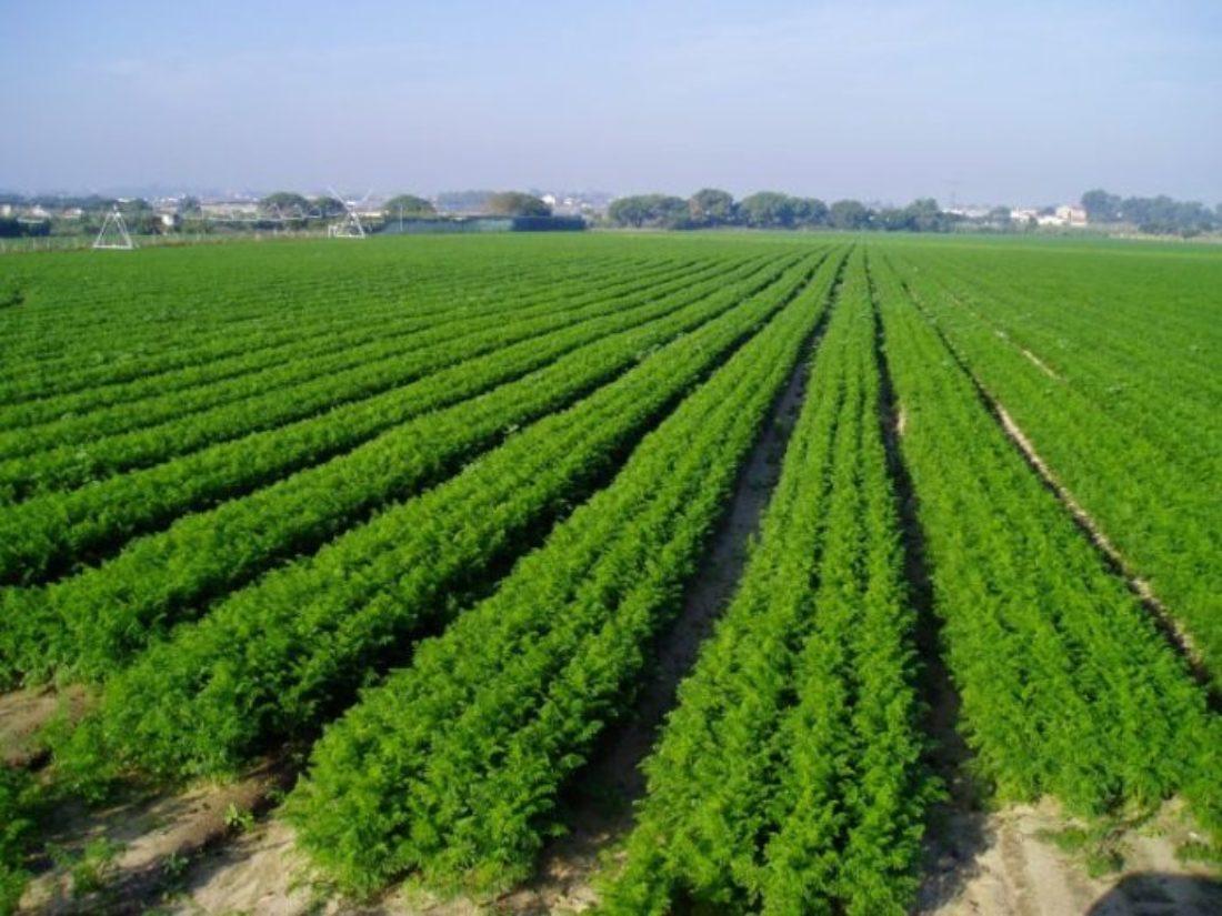 #AgroDerechos: Campaña de CGT y MSA por el respeto del sector agrícola andaluz